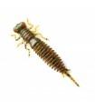 Fanatik Larva | värv 004