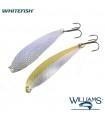 Williams Whitefish