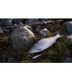 Viirastus Kraken handmade spoons for sea trout